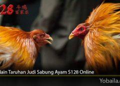 Cara Main Taruhan Judi Sabung Ayam S128 Online