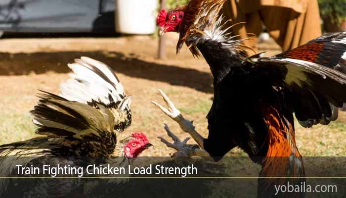 Train Fighting Chicken Load Strength
