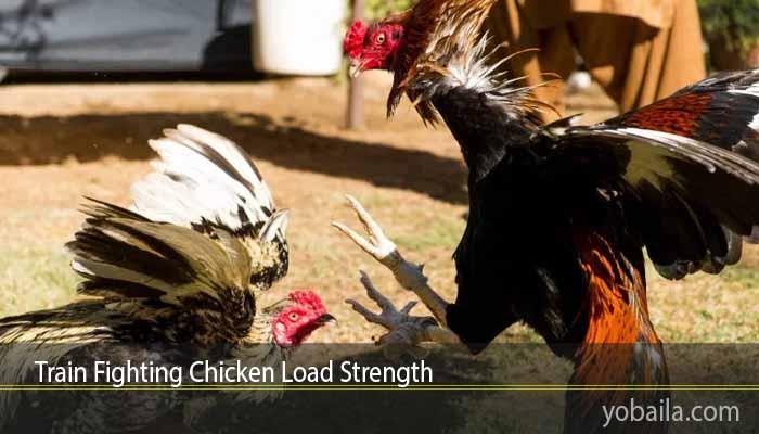 Train Fighting Chicken Load Strength